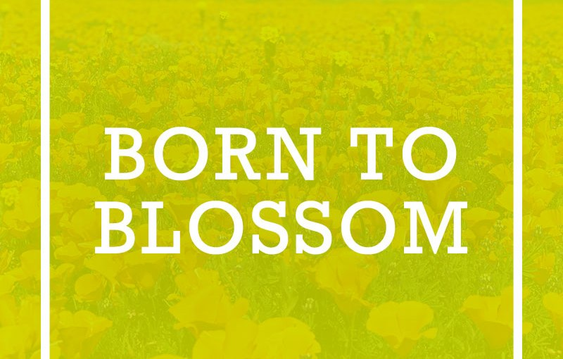 Born to Blossom
